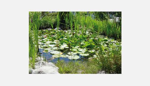 Teich Reinigen Simple Full Size Of Schnes Zuhaus Und
